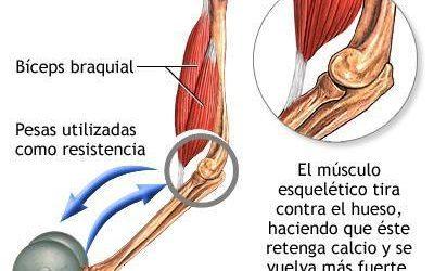 Osteoporosis: Fortalecimiento del Músculo